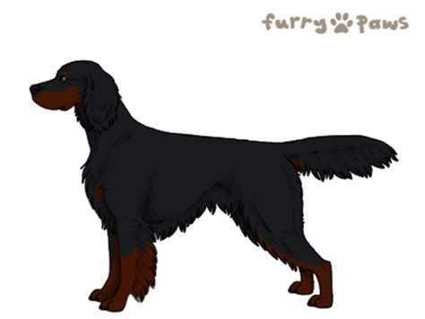 Furry-Paws Dog Breed Colors : Gordon Setter Colors