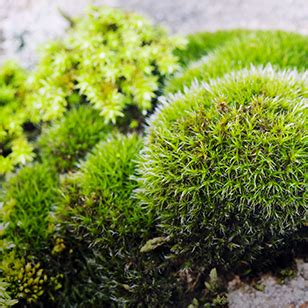 Moss | Protect