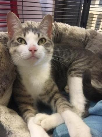Adopt Me: Mittens is a pretty kitty (adopted